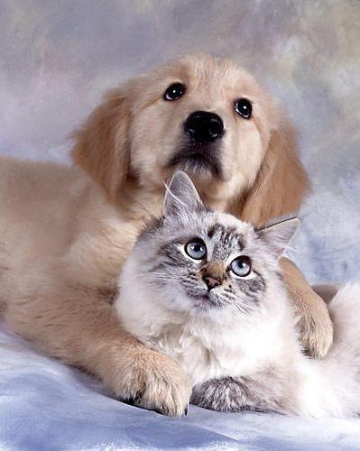 Милая пара, животные, собака,