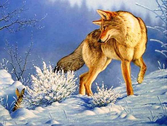 Волк и кролик, оригинал