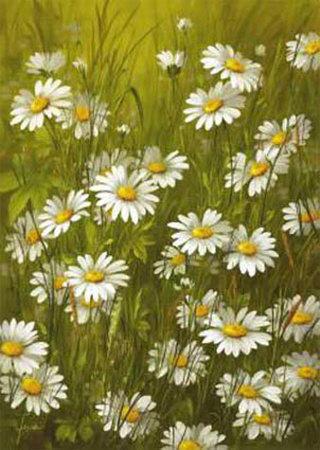 Ромашковое поле, цветы