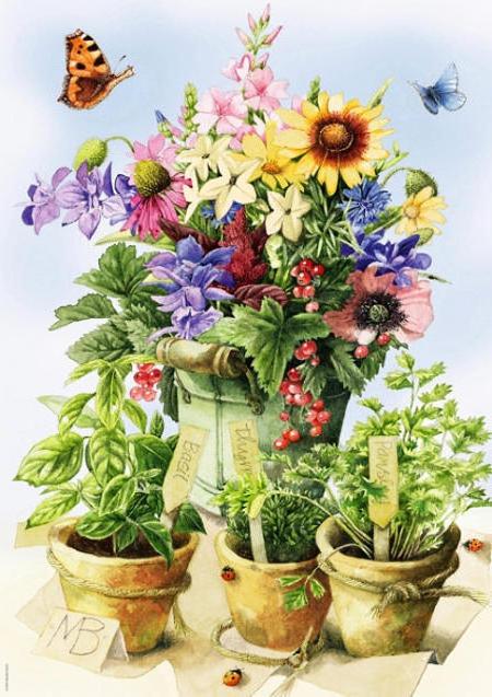 Горшки с цветами, цветы,
