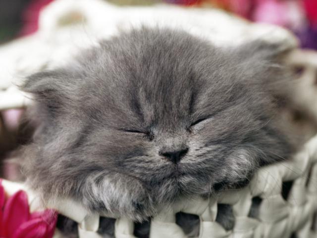 котенок спящий картинки