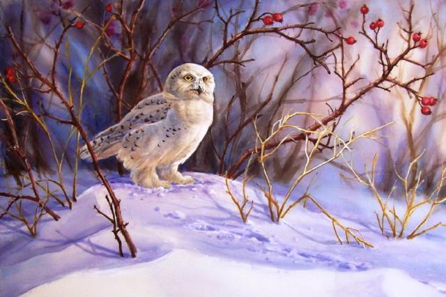 Белая сова, живопись