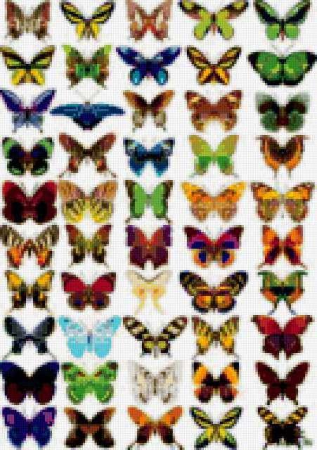 Много бабочек, предпросмотр