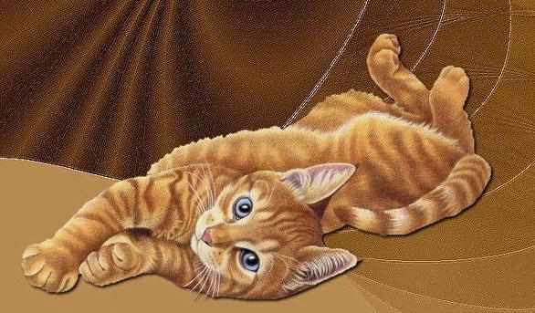 Рыжий кот, живопись, животные,