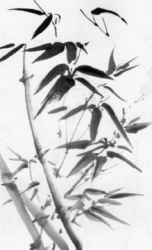 Бамбук, растения, бамбук