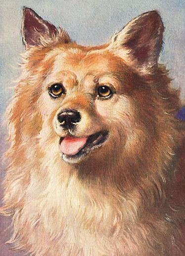 Портрет собаки, шпиц, собака,