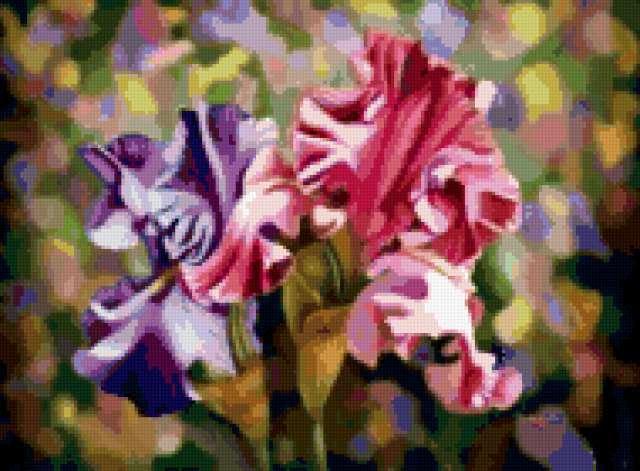 "Ирис""Весенний сад"", цветы"