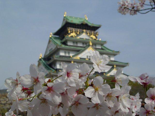 Сакура и пагода, сакура,