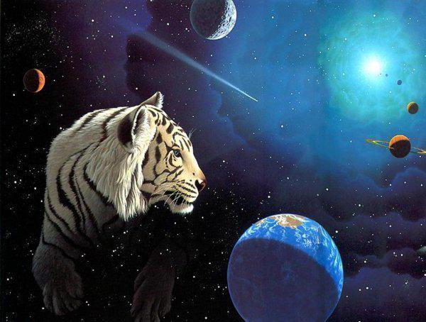 Барс в космосе, животные,