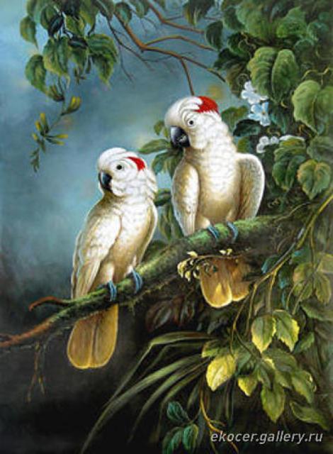 Белые попугаи, птицы