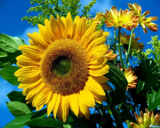 Солнечный цветок, оригинал
