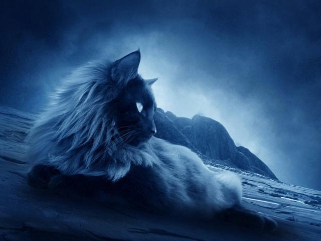 Лунный кот,