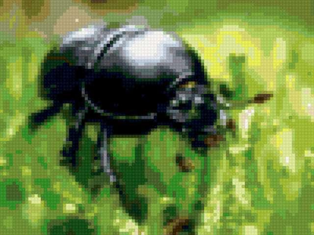 Жук, насекомые