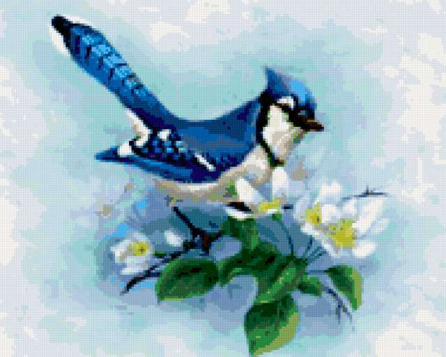 Голубая птица, птицы, лето,