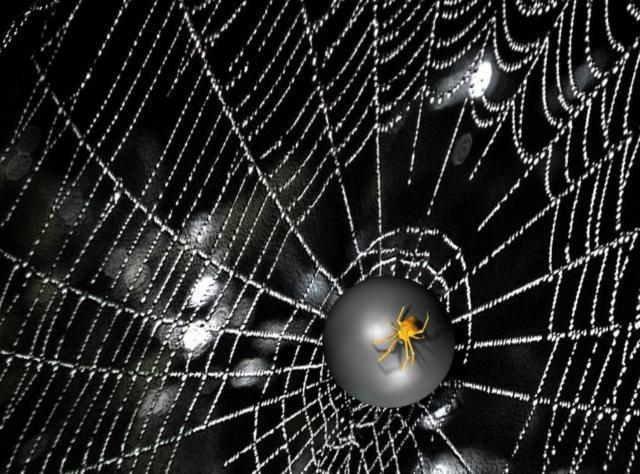 Паутина, паук, дождь