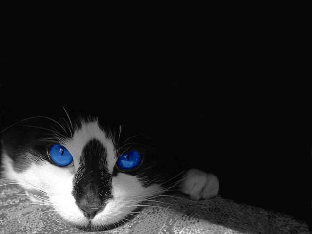 Синие глаза, кошки