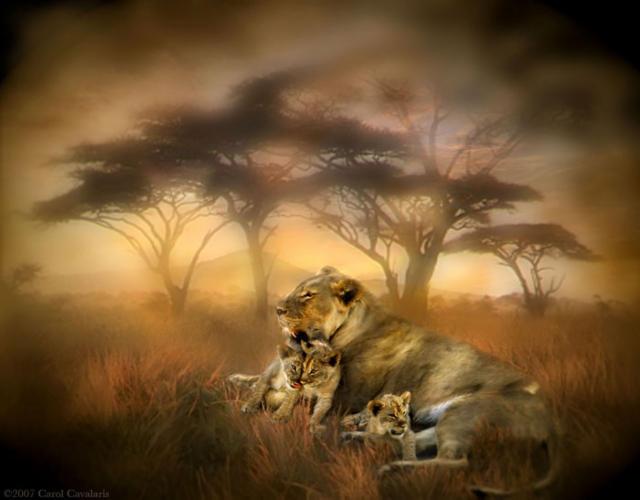 Львы, львы