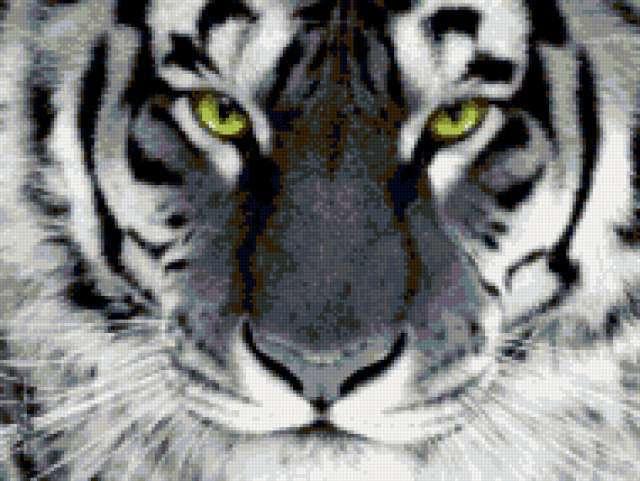 Черно-белый тигр, предпросмотр