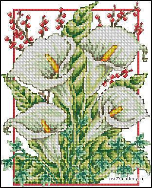 Белые каллы, цветы