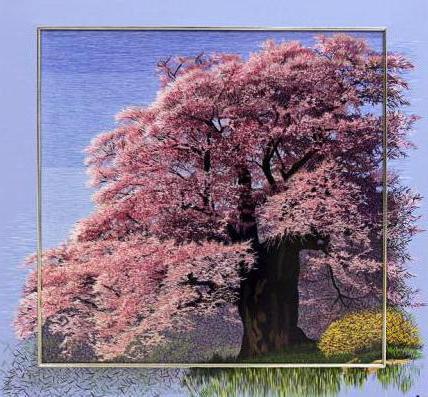 Сакура, дерево, сакура