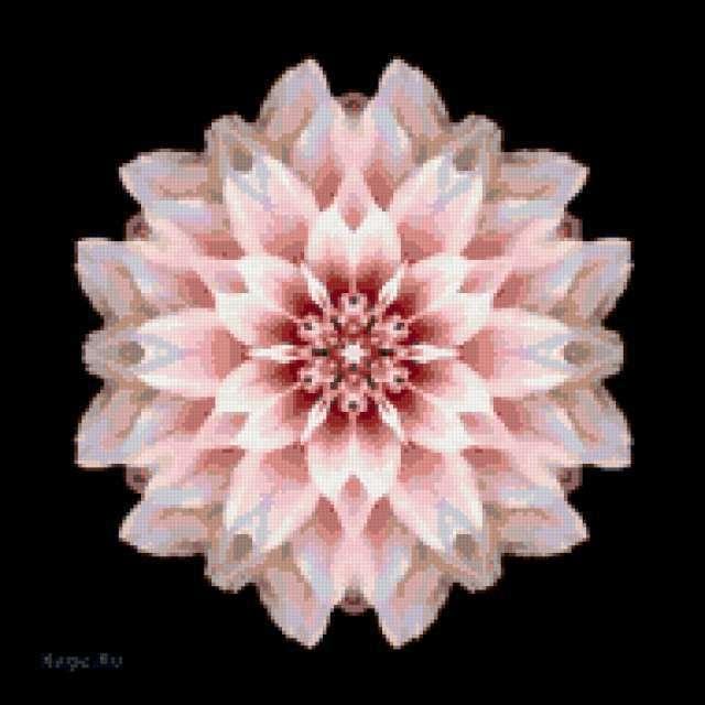орнамент, орхидея, лилия
