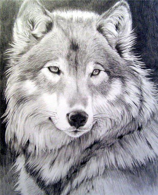 Волчица, волки, собаки