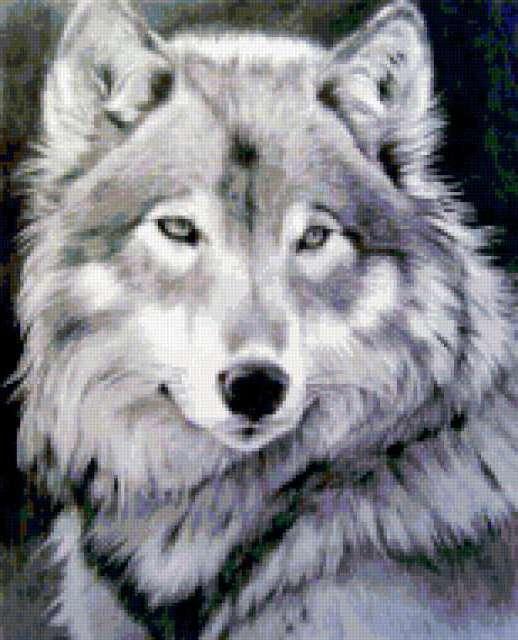 Волчица, предпросмотр