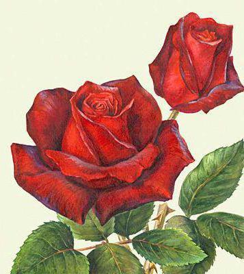 Розы для подушки, оригинал