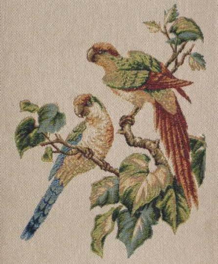 Пара попугаев, птицы, попугай,