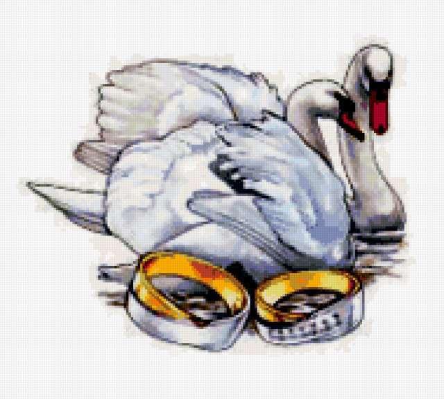 Лебединая верность, лебеди