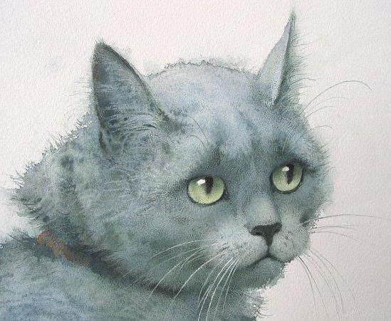 Портрет печального кота