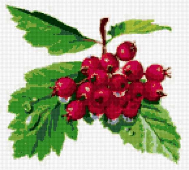 Рисунок ягодки