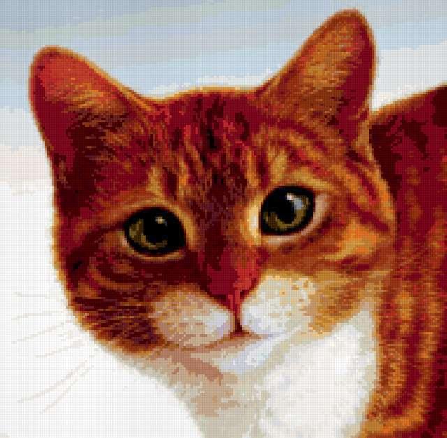 Портрет рыжей киски, животные,