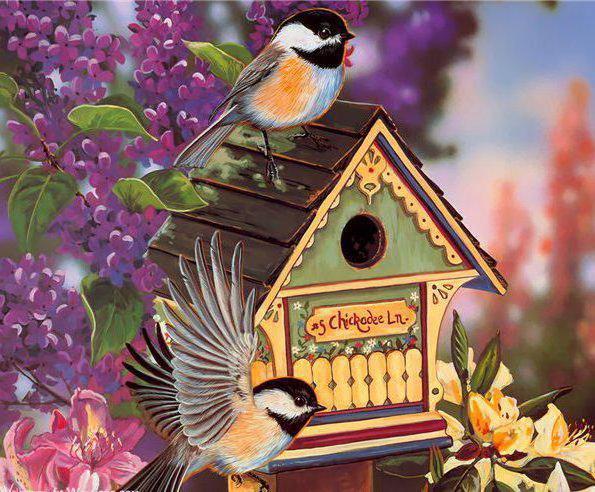 птицы, синица, домик,
