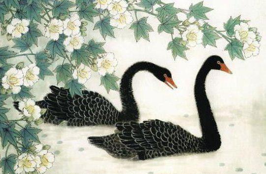 Два чёрных лебедя, птицы,