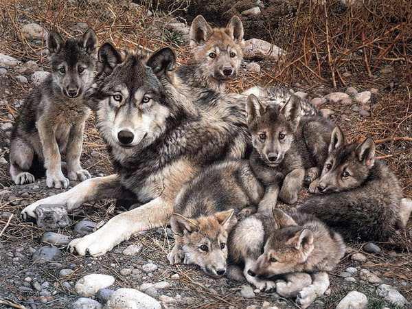 Волчица и волчата, оригинал