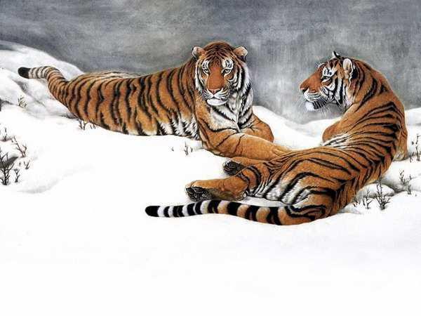Тигры на снегу, оригинал