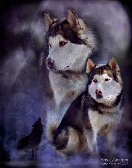 """Лайка."""", животные, собаки"""