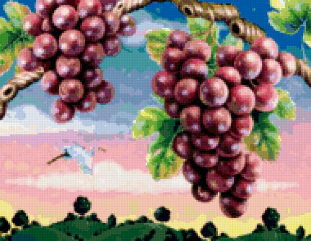 , fruits, grape
