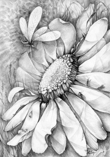 Ромашки милый лепесток, цветы,
