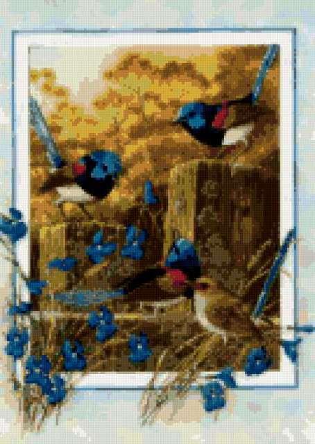 Райские птицы, предпросмотр