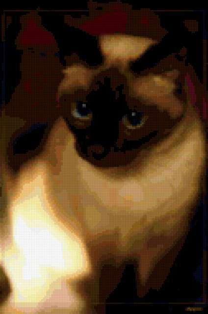 Сиамские кошки, Сиамские кошки
