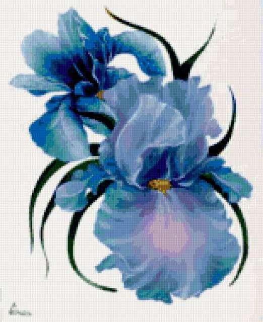 Синяя орхидея, цветы