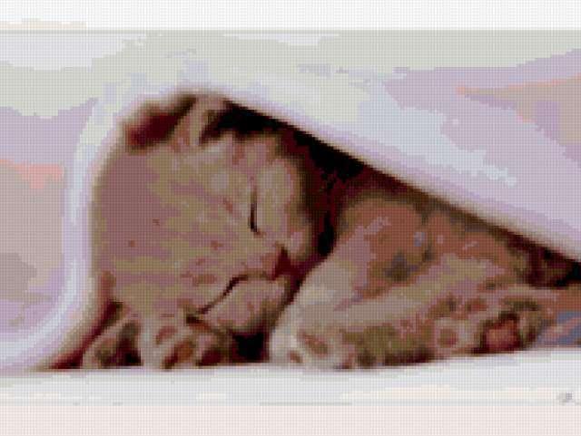 Сладко спим под одеялом ,