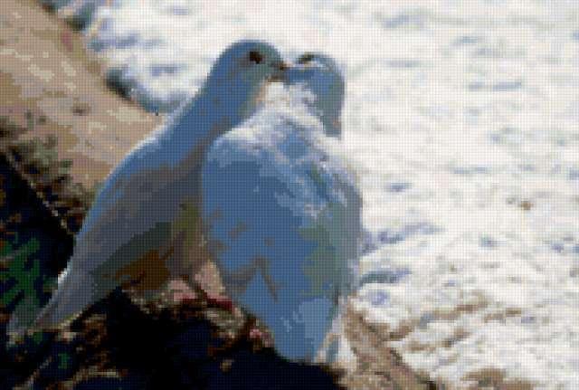Поцелуй голубей, предпросмотр