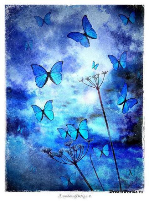 Синие бабочки, бабочки