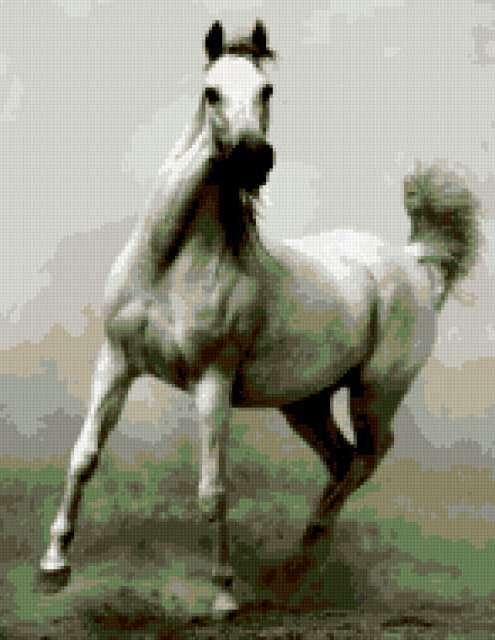 Арабский скакун, предпросмотр
