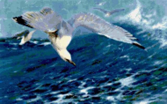 В. Кунерт. Серебристая чайка.