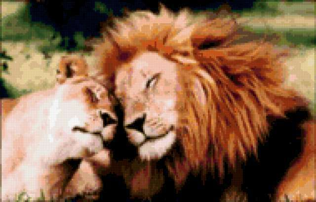 Лев и львица, предпросмотр