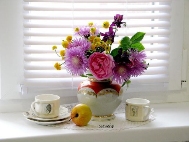 Фото цветов на окне